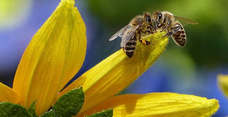 Sauvons les abeilles avec l'apiculture urbaine